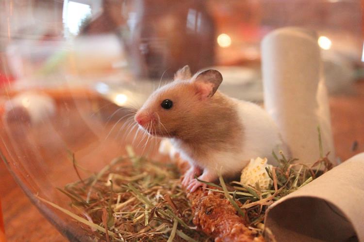 Clinique v t rinaire fabriquer un parc pour son hamster - Cabinet de radiologie la madeleine ...