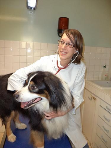 Clinique v t rinaire services - Cabinet de radiologie la madeleine ...