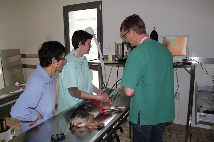 Clinique v t rinaire endoscopie - Cabinet de radiologie la madeleine ...