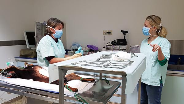 Clinique v t rinaire chartres salles de chirurgies - Cabinet de radiologie la madeleine ...
